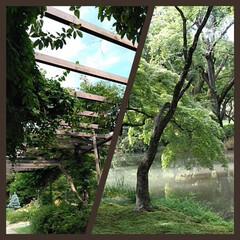 ボタニカル/散歩/植物 しばらくぶりの緑の景色。 おいしいものも…