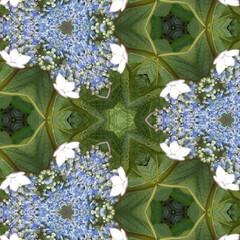 おとなのお遊び/万華鏡 六月。 小庭のあじさい。 スマホの万華鏡…