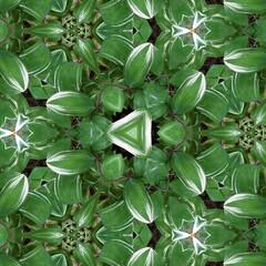 植物/おとなのお遊び/万華鏡/みんなにおすすめ 小庭のナルコユリの葉。 又又、スマホ写真…