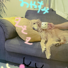 ペット/インテリア/DIY/雑貨/100均/セリア/... お疲れ様です✨ 今日はlala🎵のぐっす…(1枚目)