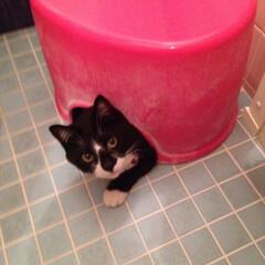 風呂/水浴び/ペット 猛暑〜暑すぎて水浴びしよう〜と誘ったら、…