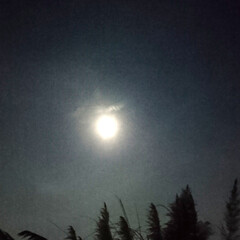 スルメイカ/混ぜご飯/ローストビーフ/団子/お月見/おうちごはん 十五夜🎑なので、お月見だんごを作りました…(9枚目)