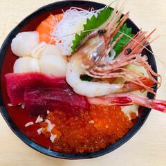わたしのごはん 北海道旅行に行って食べた 海鮮丼 美味し…
