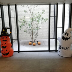 インテリア/ハロウィンインテリア/エントランス/観葉植物/窓枠/かぼちゃ/... マンションのエントランスのハロウィンディ…