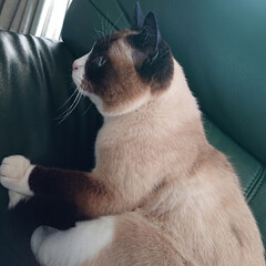動物大好き/猫大好き/実家/フォロー大歓迎/LIMIAペット同好会/にゃんこ同好会 実家猫達🐈 階段で寝てる子もいて、可愛い…