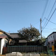 景色の良い敷地 いい天気だから(艸*>∀<*∞)アハッ