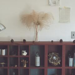 ディスプレイ/ヴィンテージ/オープン棚/収納/植物/棚/... sa_ra_さん宅のギャラリーの様に仕立…