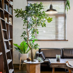 andhome/アンドホーム/インテリア/観葉植物/グリーン/ディスプレイ 大きなグリーンで、木陰のようなくつろぎ感…