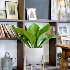 andhome/アンドホーム/インテリア/観葉植物/グリーン/ディスプレイ 本棚や飾り棚など背景が複雑な場所には、葉…