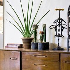 アンドホーム/andhome/グリーン/観葉植物/ディスプレイ/インテリア/...  直線的な葉がおしゃれなグリーン「サンス…