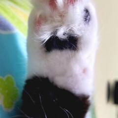 ねこ 愛猫のクロちゃんのお手手です、肉球と肉球…(1枚目)