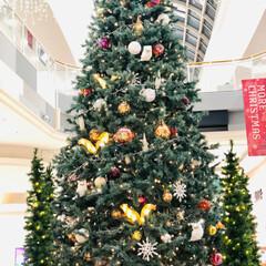 AEON/クリスマス/クリスマスツリー クリスマスムード漂う町や、こういう商業施…