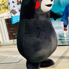 熊本/ご当地キャラクター/くまモン くまモンが熊本から遊びに来てくれていまし…(6枚目)