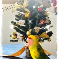 KFC/2018/クリスマス/クリスマスツリー/グルメ Merry Christmas Eve🎄…