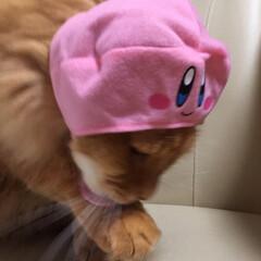 被り物/ペット/猫 1枚目 またですかー⁉️ 2枚目 ハイチ…(3枚目)