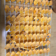 干し柿/柿/秋/100均/ダイソー/グルメ 1枚目 並べて気づきました。 乾燥したら…