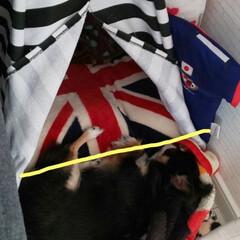 暮らし 毛布を引っ張り テントの外(黄色線)で寝…(1枚目)