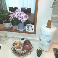 植物がある暮らし/パパのお弁当♡/♡ありがとうです(*´ω`*)♬/おはようございます♬ おはようございます♬ 今日もぼちぼち。頑…