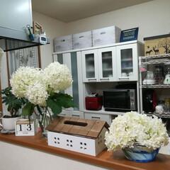 梅雨を楽しむ/梅雨 こんばんは〜  カウンターが白い紫陽花で…