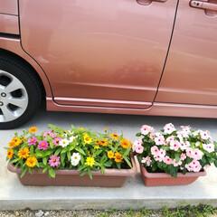 お花がある暮らし/ガーデニング初心者 お家の周りのお花たちも元気に咲いています…