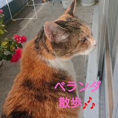 キャンドゥ/ガーデニング/花/猫 今日の一日🎶 モコ🐱も、少し起きてきて部…(3枚目)