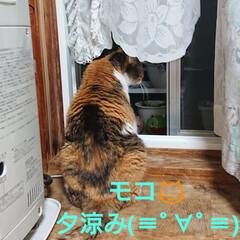 キャンドゥ/ガーデニング/花/猫 今日の一日🎶 モコ🐱も、少し起きてきて部…(2枚目)