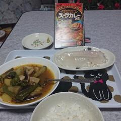 イカの刺身、スープカレー、野菜自家菜園、/おうちごはん/夏対策 札幌で大人気のカレー専門店 「マジックス…(1枚目)