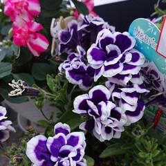 100均/夏インテリア/お庭あそび/ベランダ遊び お気に入りのお花💠🥀 ごめんね🙇💦💦3枚…