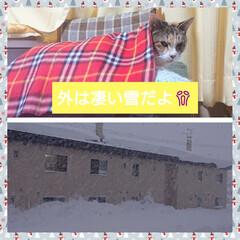 我が家のモコ😸/屋根の落雪/雪❄️ モコネコ🐱の思い出🎶 一階は屋根の落雪❄…