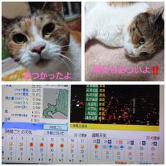 水分補給/猛暑日/わが家の家族/夏対策/猫 北海道道南、最高気温32.4℃もあったよ…