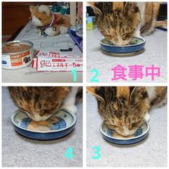 おうちごはん/猫 ①高カロリーの缶詰めとちゅーる ②モコ🐱…