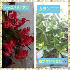 花💐/多肉植物 お家の花💠🥀