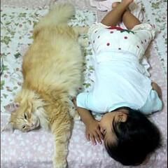 ファミリー/猫 【子守猫と猫ばあや】 2男1女、2男にゃ…