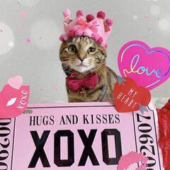 3か月/保護猫/子猫/バレンタイン/LIMIAペット同好会/フォロー大歓迎/... 今日は初めてのバレンタイン❤️ 楽しみに…