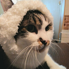 首輪/ファー/毛糸/手芸/ペット/猫/... 出来心で、マット作った時に余った毛糸を2…