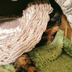 織物/編み物/手芸/毛糸/マット/ウィービング/... ウィービングで作るマット3個目。 お笑い…(2枚目)