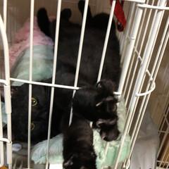 黒/仰向け寝/ネコ/猫 人か?(笑) くつろぎすぎ😆