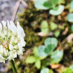 野の花/花/庭/絵手拭い/暮らし リビングの絵手拭い 5月バージョン🌷 藤…(4枚目)