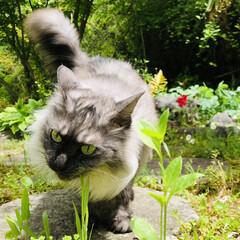 花/庭/猫/絵手拭い 皆様こんにちは🌞 今日はとってもいい天気…(8枚目)