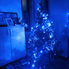 イルミネーション/ツリー/クリスマス/クリスマスツリー 玄関にツリー🎄も出しました♪ 夜はイルミ…(3枚目)