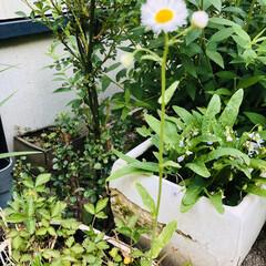 野の花/花/庭/絵手拭い/暮らし リビングの絵手拭い 5月バージョン🌷 藤…(9枚目)
