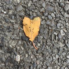 風景 ハート型落ち葉を発見🍂♡
