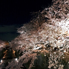 平成最後の/春のフォト投稿キャンペーン/春の一枚 夜桜