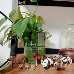 フィギュア/観葉植物インテリア/観葉植物のある暮らし