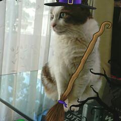 まめちゃん/魔女/猫/ハッピーハロウィン/ハロウィン おはようございます✴   ハッピーハロウ…