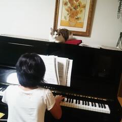 ピアノ/ピアノ練習/猫 お姉ちゃんのピアノを、まるで先生のように…