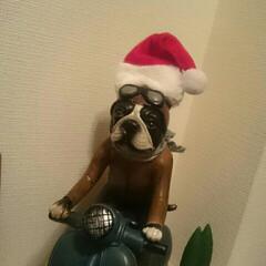行ってきまーーーす/笑ったもん勝ち/サンタさんに/我が家のブル君/おはようございます おはようございます🎵  我が家の玄関ニッ…(2枚目)