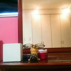 今日の夕ごはんは。。。/赤いキッチン/わたしのお気に入り/眼鏡スタンド ブルドック/こんにちは こんにちは☺   今日も、こちらはとって…(2枚目)