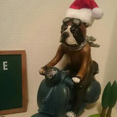 行ってきまーーーす/笑ったもん勝ち/サンタさんに/我が家のブル君/おはようございます おはようございます🎵  我が家の玄関ニッ…