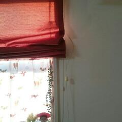 赤がテーマ/娘の部屋 こんばんは☺   娘の部屋✨   今のと…(2枚目)